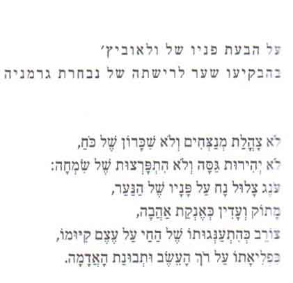 ולאוביץ' תמיר גרינברג