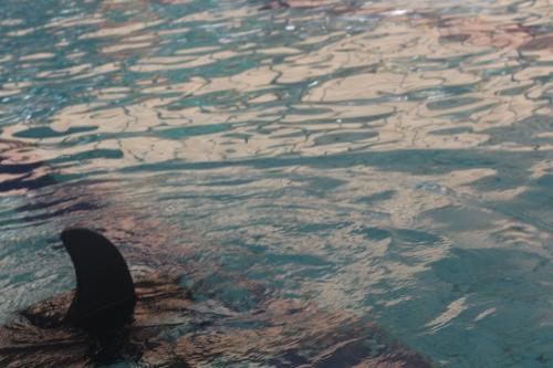 כריש לונג שוט
