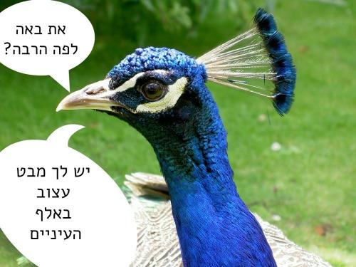 PeacockHead